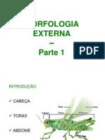 MORFOLOGIA EXTERNA 1