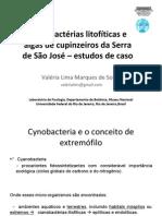 Cianobactérias litofíticas e algas de cupinzeiros da Serra