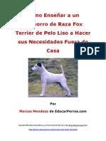 Como Enseýýar a un Cachorro de Raza Fox Terrier de Pelo Liso a Hacer sus Necesidades Fuera de Casa