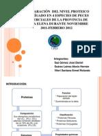 Comparación  Del Nivel Proteico Del Hígado En 4
