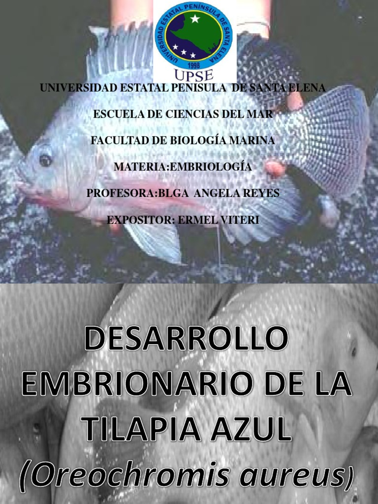 Desarrollo Embrionario en Tilapias