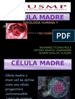 Celula Madre Nuevo