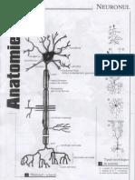 Neuronul,Sinapsa,Celulele Sangelui,Celula si tesuturile