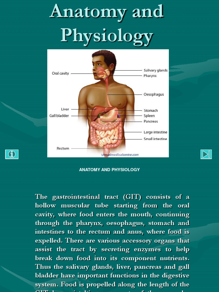 anatomy and physiology:gastrointestinal tract powerpoint ...