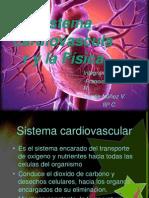 Sistema cardiovascular y la Física