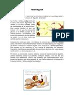 biokimika trabajo4