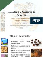 Morfología y Anatomía de Semillas