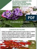 Folhas e Flores