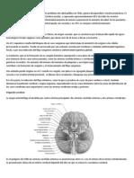 Descripción y epidemiología del ataque cerebrovascular