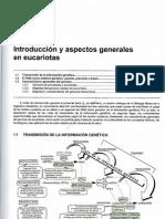 0-1tema 1 Introduccion y Aspectos Generales en Eucariotas