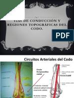 Vías de Conducción y regiones topográficas del Codo