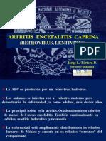 6- PROGAN AEC y Articulares.