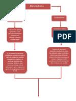 Mapa Conceptual de Las Rutas Metabolicas