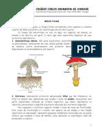 1Reino Fungi