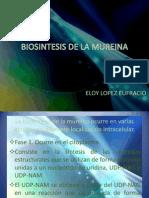 Biosintesis de La Mureina