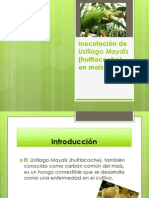 Proyecto Del Huitlacoche Flor