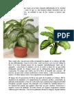 Planta Venenosa