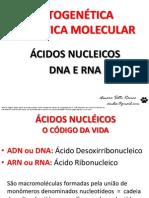 CITOGENÉTICA - ÁCIDOS NUCLEICOS