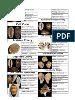Mollusca Worksheet Part 2