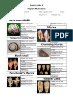 Mollusca Worksheet Part 1