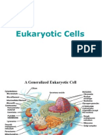Eukariotic+Cell+Structure
