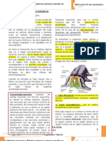 2. Médula Espinal y Plexos Somáticos