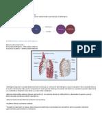 resumen2 ventilacion pulmonar