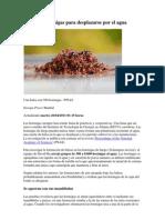 Balsas de Hormigas Para Desplazarse Por El Agua