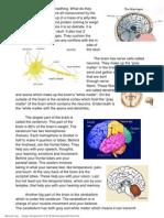 brain summary pdf