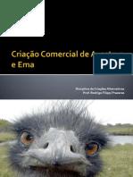 Criação Comercial de Avestruz e Ema