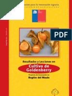 Cultivo de Goldenberry