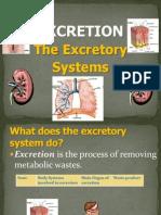 Excretion Urinarysystem 100228085902 Phpapp01