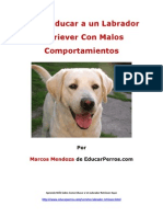 Como Educar a Un Labrador Con Malos Comportamientos