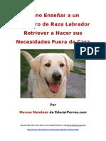 Como Enseñar a un Cachorro de Raza Labrador a Hacer sus Necesidades Fuera de Casa