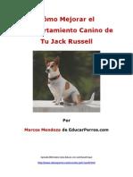 Cómo Mejorar el Comportamiento Canino de tu Jack Russell