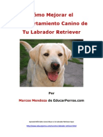 Cómo Mejorar el Comportamiento Canino de tu Labrador