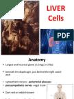 Liver Cells -Pradep