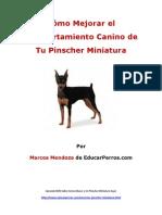 Como Mejorar el Comportamiento Canino de tu Pinscher Miniatura