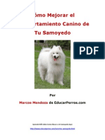 Cómo Mejorar el Comportamiento Canino de tu Samoyedo