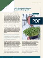 Improving soybean disease resistance by identifying its antibiotic properties