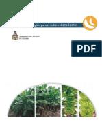 Paquete tecnologico del cultivo del Pátano