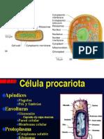 4-Procario_1_