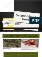 PP Salamander and Newts