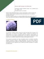 Fsisopato Resiste a Infecc