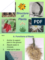 Plant Structure Adaptations and Responses
