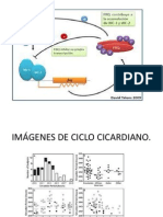 Ciclo Cicardiano Power Point