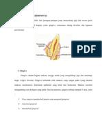 Jaringan Periodontal,Poket Periodontal,Gingival Enlargement