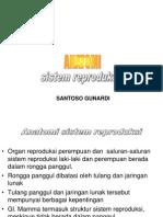 anatomi reproduksi 2010