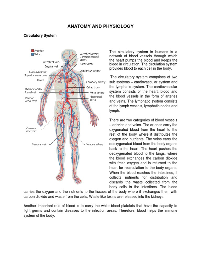 Anatomy and Physiology of Dengue   Circulatory System   Coagulation