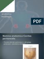 Peritoneo anatomía fisiología